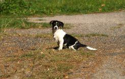 Więcej o: Zaproszenie nakonsultacje społeczne projektu programu opieki nadzwierzętami bezdomnymi