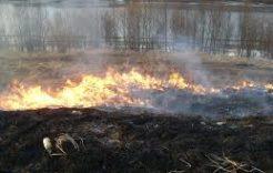 Więcej o: Zakaz wypalania traw