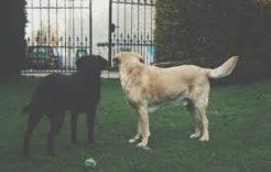 Więcej o: Obowiązki właścicieli psów iinnych zwierząt domowych