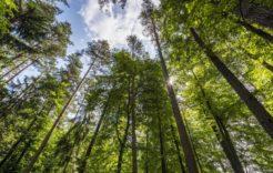 Więcej o: Wsparcie nainwestycje zwiększające odporność ekosystemów leśnych