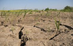 Więcej o: Szacowanie strat suszowych – informacja