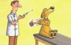 Więcej o: Obowiązek szczepienia psów przeciw wściekliźnie