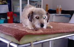 Więcej o: Pieski doadopcji