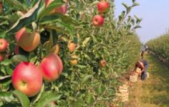 Więcej o: Wytyczne MRiRW iGIS dla producentów rolnych. . .